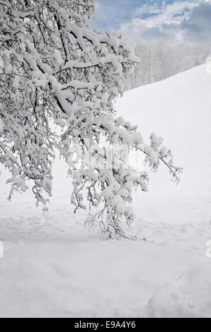 Landscape in Winter Park - Stock Photo
