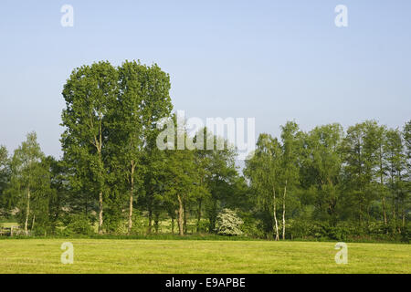 Summerly landscape with broadleaf tree - Stock Photo