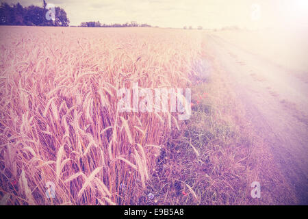 Vintage photo of side road through field at sunset. - Stock Photo