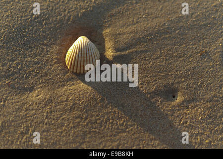 A shell in Spain Andalusia Costa de la luz during the sunrise on the beach sand. - Stock Photo