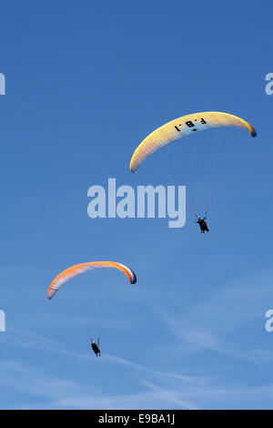 One dual and one single seat paraglider against blue sky - Stock Photo