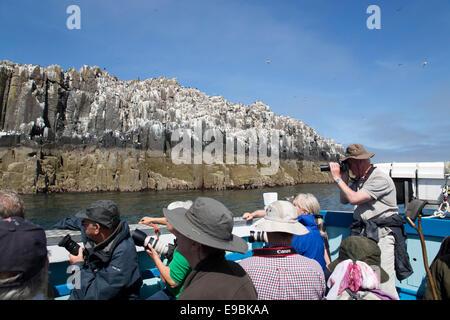 Seabirds; Inner Farne; Boat Trip; Northumberland; UK - Stock Photo