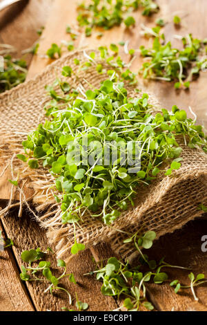 Raw Green Arugula Microgreens on a Background - Stock Photo