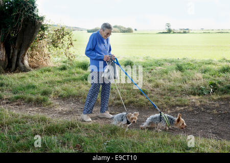 Elderly woman walking her dogs in The Ilex north of Goring Gap Goring by Sea with farmland backing on - Stock Photo