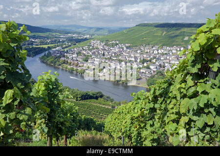 Vineyard and Moselle River Bernkastel-Kues Moselle Valley Germany - Stock Photo