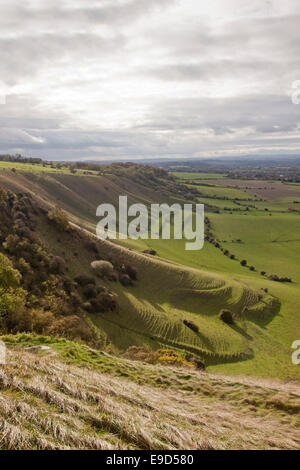 View of terracettes, soil creep from Westbury White Horse, Wiltshire, England - Stock Photo