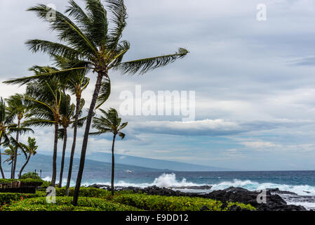 Palm Trees Storm Hawaii Hurricane Wind Ocean Blue Clouds Stormy Landscape - Stock Photo