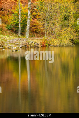 Autumn reflections in Tarn Hows, a lake in the Lake District, Cumbria, England, UK, Europe - Stock Photo