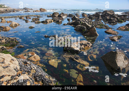 View of Atlantic Ocean from a beach in Foz area, Porto, Portugal - Stock Photo