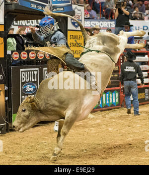 Las Vegas, NV, USA. 25th Oct, 2014. October 25, 2014: Mike Lee rides Tracker during the PBR Pro Bull Riding Finals - Stock Photo