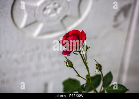 Red rose in front of a gravestone at Essex Farm Cemetery, Ypres, Belgium. - Stock Photo