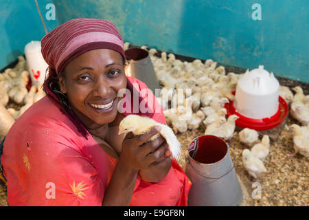 Chicken farm in Arusha, Tanzania, East Africa. - Stock Photo