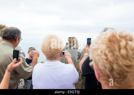 Tourists photographing the monkeys on the Rock of Gibraltar. - Stock Photo