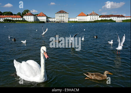 Mute swans (Cygnus olor) and other water birds on the palace canal, behind the east side of Nymphenburg Palace, - Stock Photo