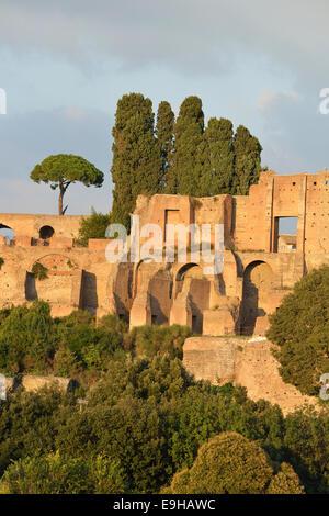 Ruins of Domus Augustana on Palatine Hill with Pines (Pinus pinea), Rome, Lazio, Italy - Stock Photo