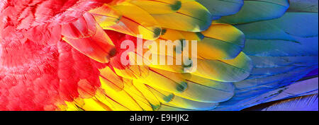 Parrot feathers, red, yellow and blue exotic texture, background - Stock Photo