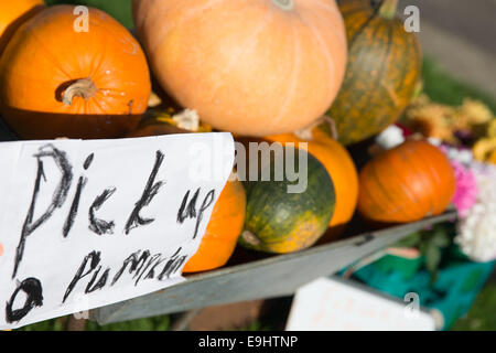 Newport Pagnell, Buckinghamshire, UK. 28th October, 2014.  Mr John Sharrn shows his own grown pumpkins in time for - Stock Photo