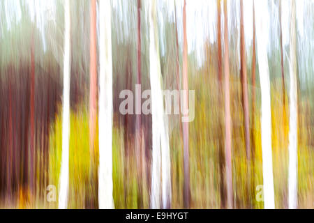 Abstract motion blurred trees in a forest. - Stock Photo