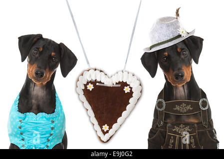 Bavarian dogs - Stock Photo