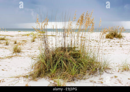 Seaoats - Reed grasses on Gasparilla Island State Park beach in SW Florida - Stock Photo