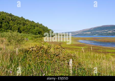Black Water Marshes, Trossachs, Stirlingshire, Scotland, UK - Stock Photo