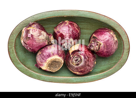 five hyacinth bulbs in an isolated oval wooden bowl - Stock Photo