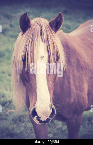 Vintage portrait of a chestnut horse with long foretop. - Stock Photo