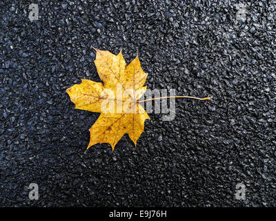 Yellow autumn leaf on black asphalt background. - Stock Photo