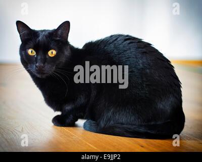 Sitting black cat on a wooden floor - Stock Photo