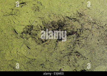 Stagnant waterway. Photographed in Gdansk, Poland - Stock Photo