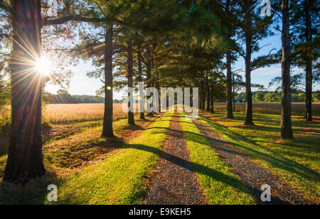 A sunburst of early morning light on a driveway in Talbot County, Maryland USA - Stock Photo