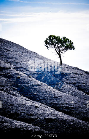 Solitary tree in a mountain at sunset. - Stock Photo