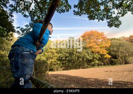 Autumn colour in Michaelwood, Gloucestershire UK