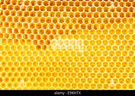 natural honey in honeycomb background - Stock Photo