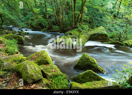 The river Fowey flowing through Bodmin Moor in Cornwall at Golitha Falls - Stock Photo