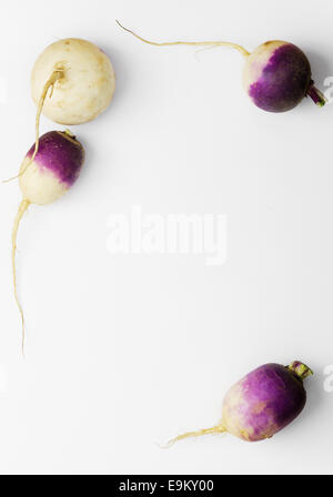 Fresh turnip background with copy space (negative space) - Stock Photo