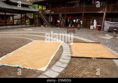 Rice drying in a square, Xijiang Miao Village, Guizhou Province, China - Stock Photo