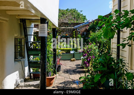 An Elizabethan Garden growing a range of herbs and plants at the rear of the Six Poor Travellers' House, Rochester - Stock Photo
