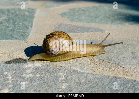 Cute snail crawling on concrete garden path - Stock Photo