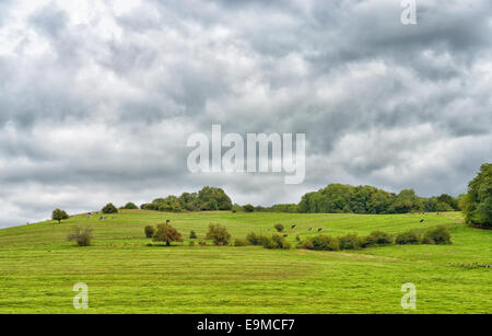 Agricultural landscape in central France with caws eating grass - Stock Photo