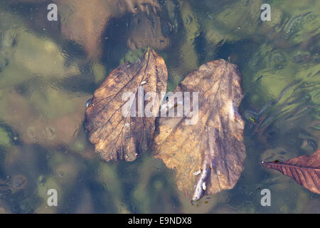 Frozen autumn-leaves - Stock Photo