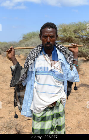 Bedouin Camel near Lake Assal, Djibouti - Stock Photo
