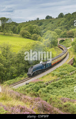 'Sir Nigel Gresley' steam train and carriages, travelling through moorland from Pickering to Goathland, North Yorkshire - Stock Photo