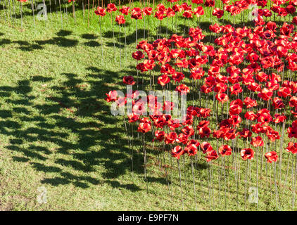 Red ceramic poppies with shadows at The Tower Of London Remembers exhibition, Blood Swept Lands and Seas of Red - Stock Photo