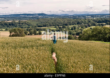 A woman walking her dog on a path through a field of wheat along the Mortimer Trail on Wapley Hill, Herefordshire. - Stock Photo
