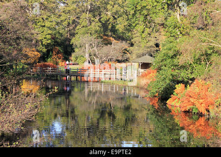Savill Garden, Englefield Green, Windsor, Berkshire, UK. 31st October 2014. It was a record breaking day as temperatures - Stock Photo