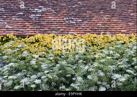 Great Dixter, East Sussex - the garden created and made famous by Christopher Lloyd. The Hovel - Stock Photo