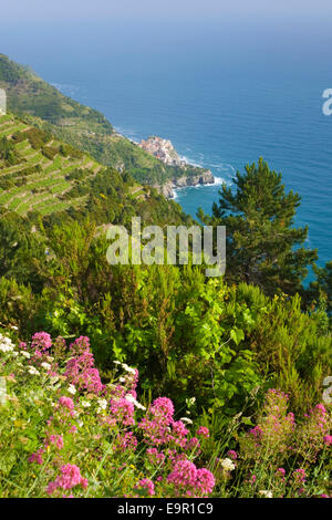 Manarola, Cinque Terre National Park, Liguria, Italy. View to the distant village from hillside, wild flowers in - Stock Photo
