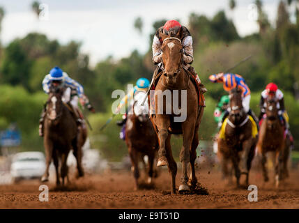 Arcadia, CA, USA. 2nd Nov, 2014. November 01 2014: Texas Red, ridden by Kent Desormeaux and trained by J. Desormeaux, - Stock Photo