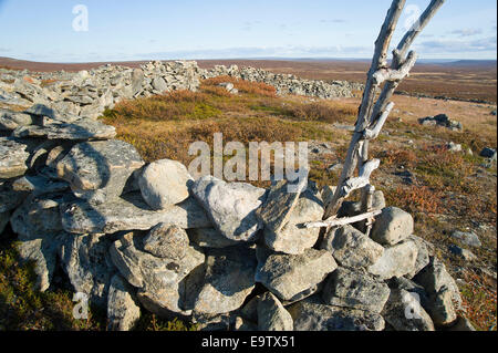 Old fence of reindeer herding - Stock Photo